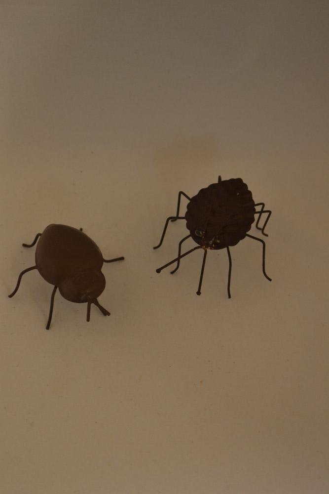 DSC_0491 insecten als deco